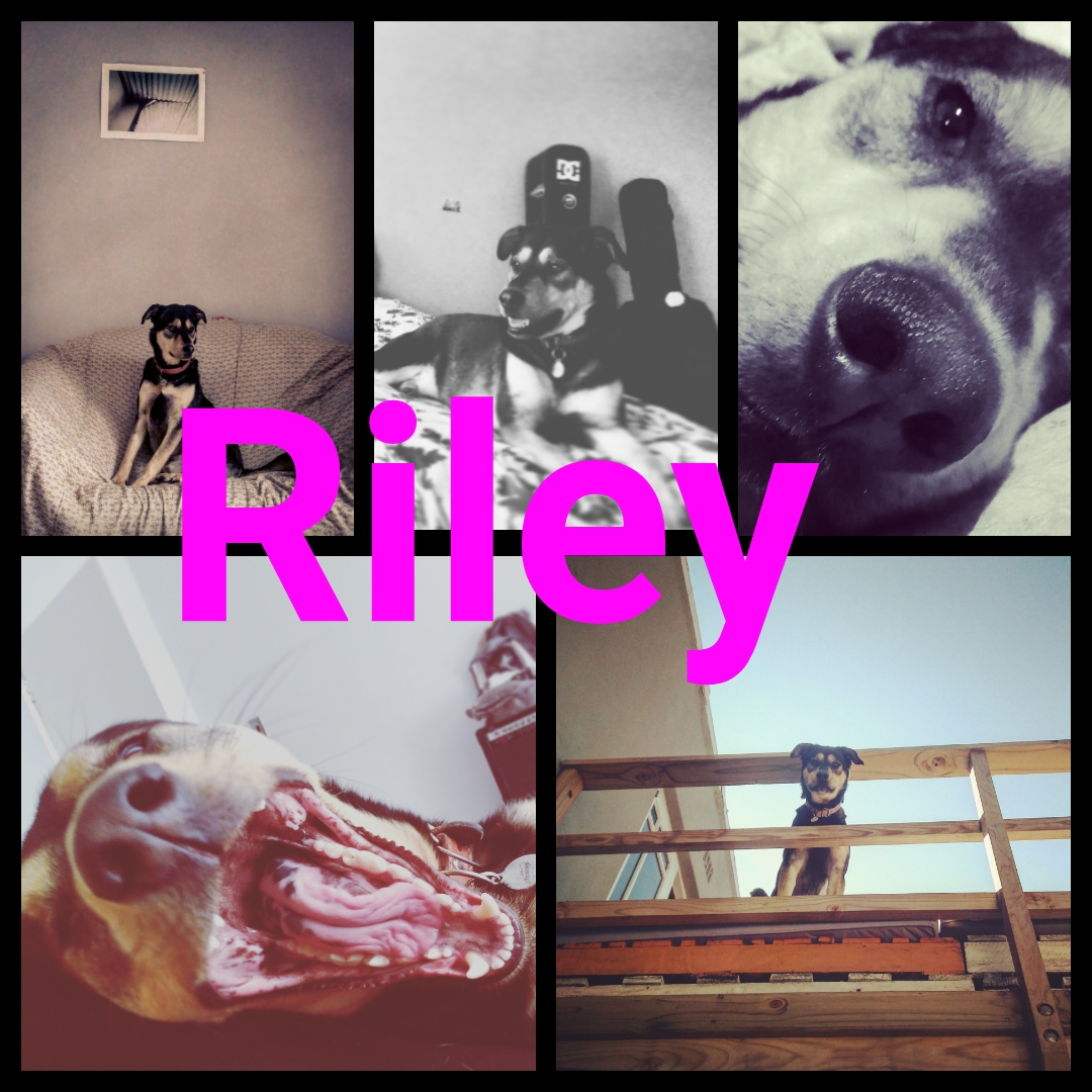 happy endings riley